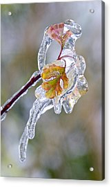 After The Ice Storm Acrylic Print