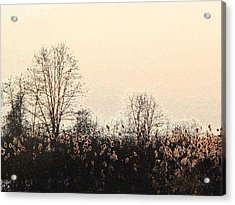 After The Leaves Dbae Acrylic Print by Lyle Crump