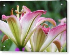 Acrylic Print featuring the photograph After The Rain by Anthony Rego