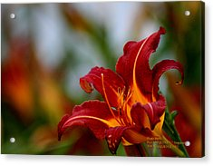 Acrylic Print featuring the photograph After The Rain Came The Flowers  by Paul SEQUENCE Ferguson             sequence dot net