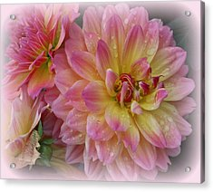 After The Rain - Dahlias Acrylic Print