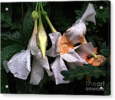 After The Rain - Flower Photography Acrylic Print
