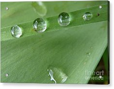 Acrylic Print featuring the photograph After The Rain by Jean Bernard Roussilhe