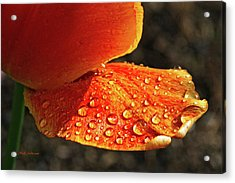 After The Rain Acrylic Print by Mick Anderson