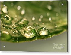 After The Rain Acrylic Print by Sandra Cunningham