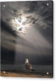 After The Storm Acrylic Print by Elizabeth Reynders