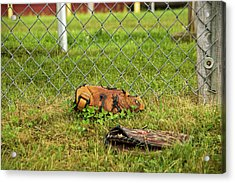 After Video Games Acrylic Print