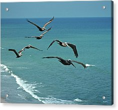Afternoon Flight Acrylic Print by Frank Mari