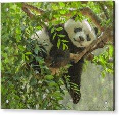 Afternoon Nap Baby Panda Acrylic Print