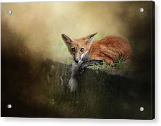 Afternoon On The Wall Acrylic Print