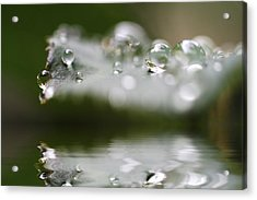 Afternoon Raindrops Acrylic Print