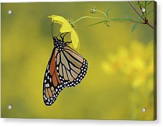 Acrylic Print featuring the photograph Afternoon Snack by Ann Bridges