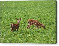 Afternoon Snack  Acrylic Print