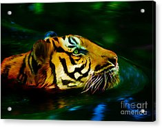 Afternoon Swim - Tiger Acrylic Print