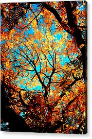Afternoon Acrylic Print by Tim Tanis