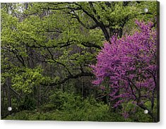 Acrylic Print featuring the photograph Afton Virginia Spring Red Bud by Kevin Blackburn