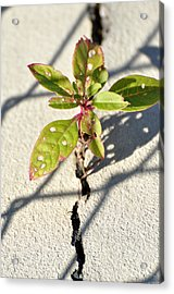 Against All Odds Acrylic Print by Jan Amiss Photography
