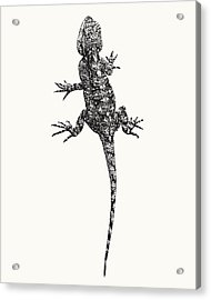 Agama Lizard In Graphic Monochrome Acrylic Print