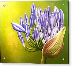 Acrylic Print featuring the painting Agapanthos by Natalia Tejera
