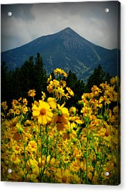 Agassiz Peak High Above The Meadow Acrylic Print