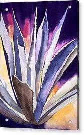 Agave 5 Acrylic Print by Eunice Olson