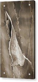 Agave Cactus Acrylic Print