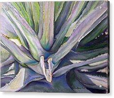Agave Acrylic Print by Carole Haslock