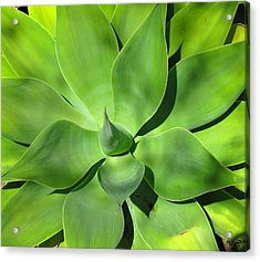 Agave Delight Acrylic Print by Candace Garcia
