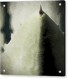 Agave Impression Four Acrylic Print