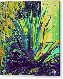 Agave Maria Acrylic Print by Randall Weidner