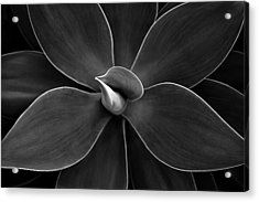 Agave Leaves Detail Acrylic Print by Marilyn Hunt