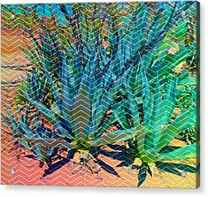 Acrylic Print featuring the mixed media Agave by Michelle Dallocchio