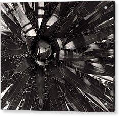 Agave Acrylic Print by Steve Bisgrove