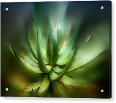 Agave Sunrise Acrylic Print by Joseph Hollingsworth