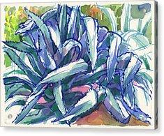 Agave Tangle Acrylic Print