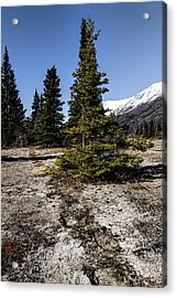 Acrylic Print featuring the photograph Age-old Bear Trail by Fred Denner