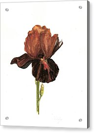 Aged Acrylic Print by Susan Tilley
