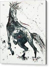 Agitato Fervour Acrylic Print by Penny Warden