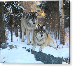 Aidan And Denali-brothers Forever Acrylic Print by Gerry Sibell