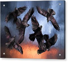 Airborne Unkindness Acrylic Print