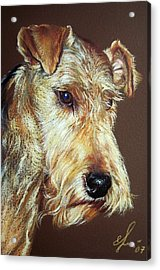 Airdale Terrier Acrylic Print