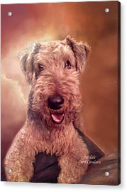 Airedale Acrylic Print by Carol Cavalaris
