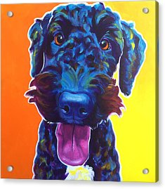 Airedoodle - Fletcher Acrylic Print by Alicia VanNoy Call