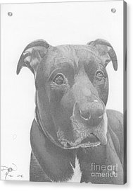 Ajax Graphite Dog Portrait  Acrylic Print