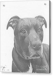 Ajax Graphite Dog Portrait  Acrylic Print