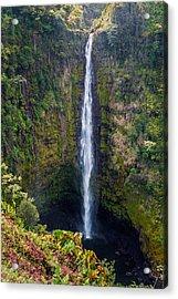 Akaka Falls - The Big Island Hawaii Acrylic Print by Brian Harig