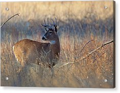Acrylic Print featuring the photograph Alarm by Jim Garrison