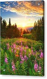 Alaska Field Acrylic Print