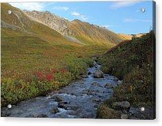 Alaska Fireweed And Willow Creek Along Hatcher Pass Road Acrylic Print