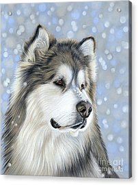 Acrylic Print featuring the mixed media Alaskan Malamute by Donna Mulley